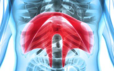 Diafragma. El gran desconocido
